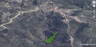 Mirzaoba-6480m2-barter-2